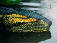Лечение от укуса зеленого змия